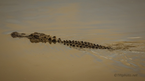 With A Purpose, Alligator - click to enlarge
