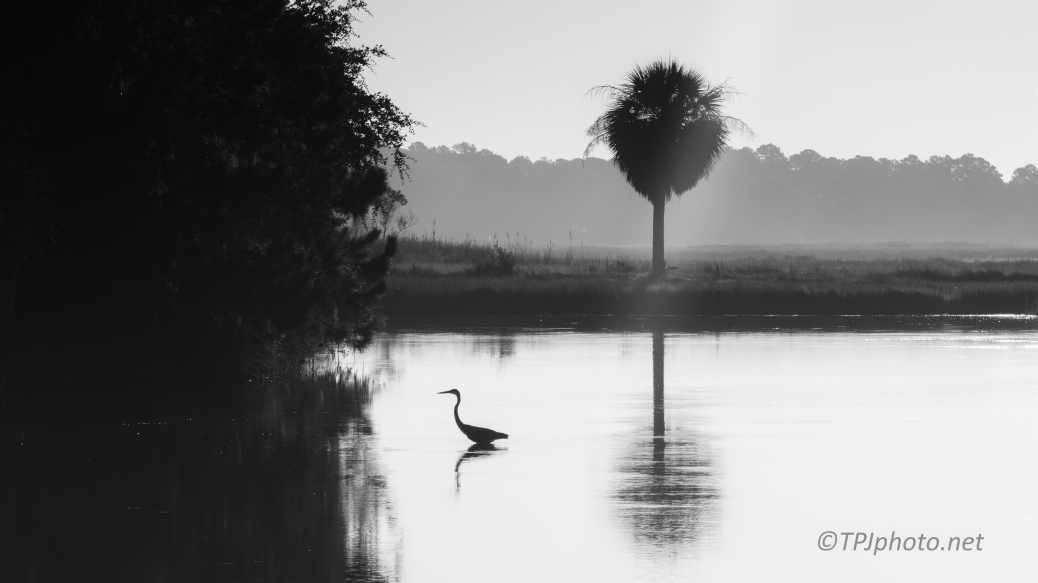 Marsh In The Morning - click to enlarge