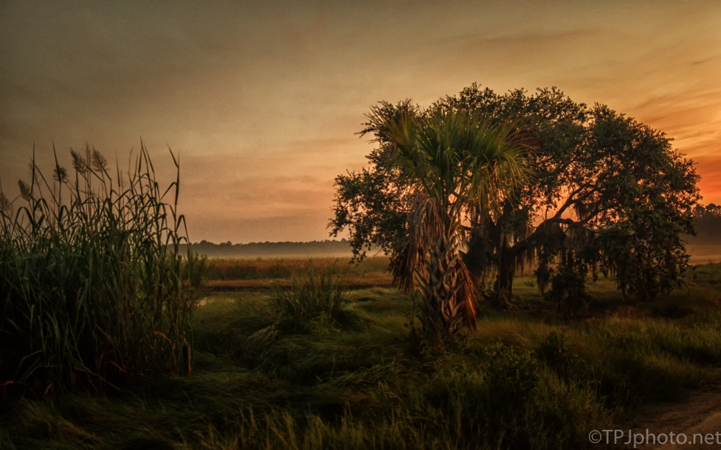 Morning At A Marsh - click to enlarge
