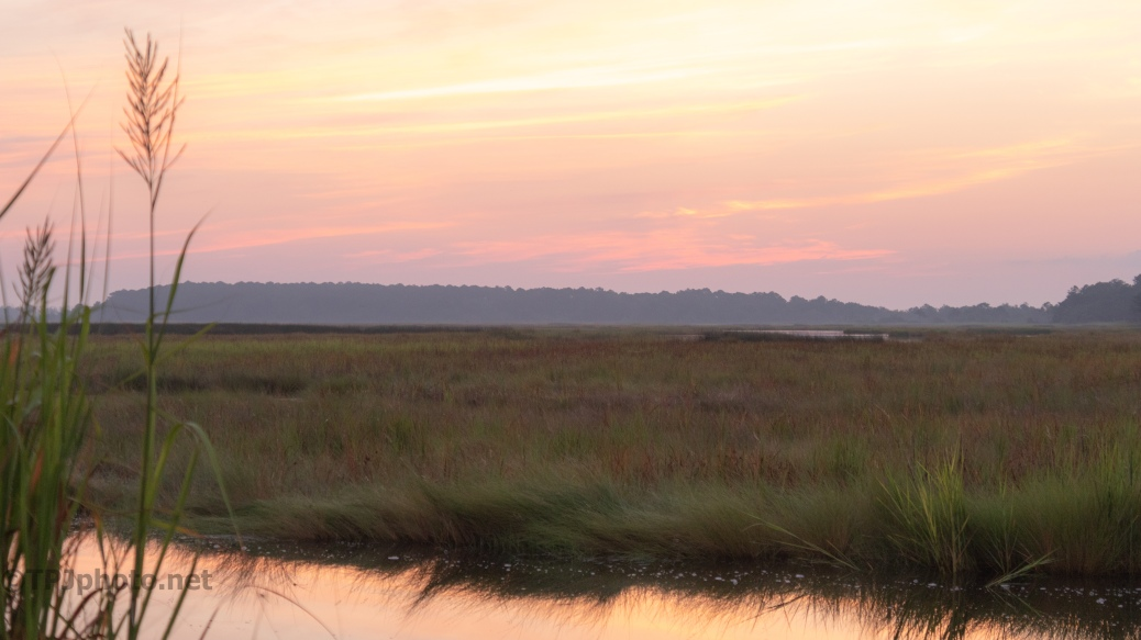 Not Sun Rise, In A Marsh - click to enlarge