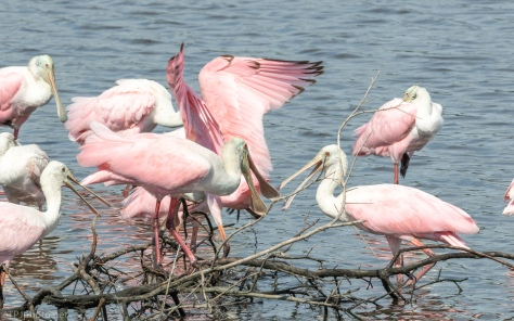 Crowd Control, Spoonbill - click to enlarge