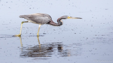 Concentration, Heron - click to enlarge