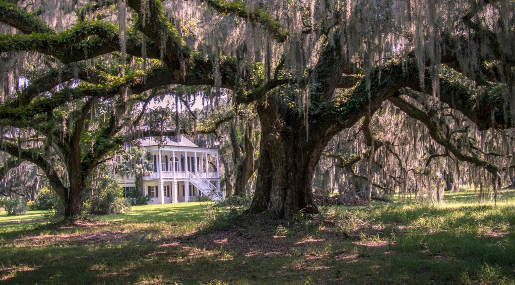 Grove Plantation (2) - click to enlarge