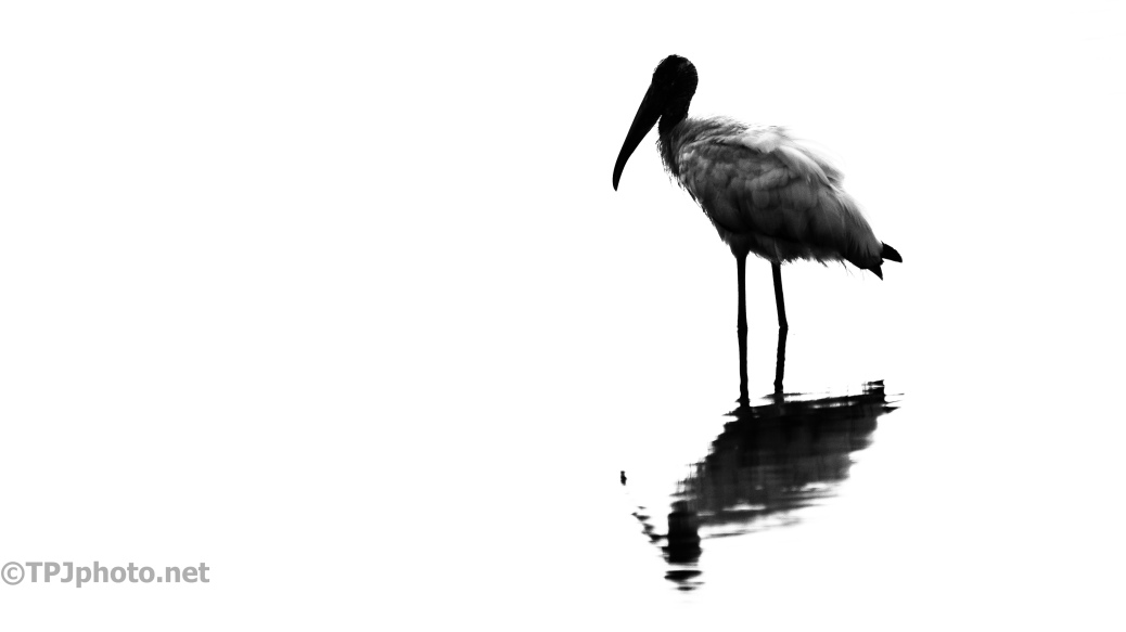 Wood Stork, Silhouette - click to enlarge