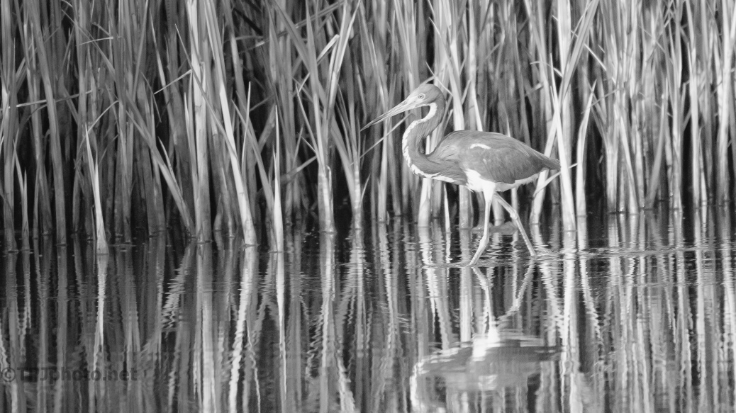 Camouflage, Heron - click to enlarge