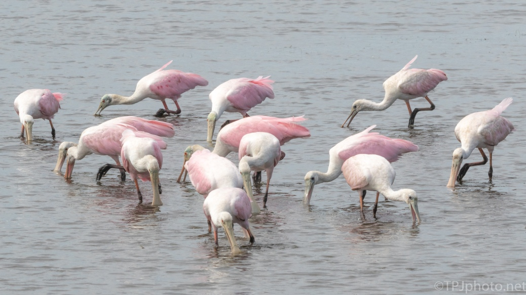 Bowl, Spoonbills - click to enlarge