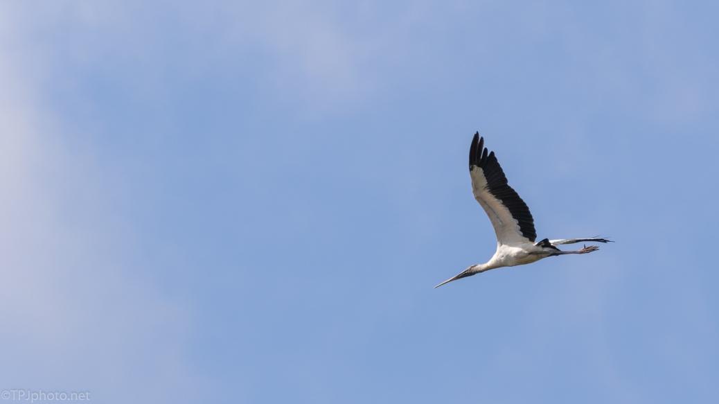Blue Sky, Big Bird - click to enlarge