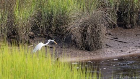 Scenes From A Marsh - click to enlarge