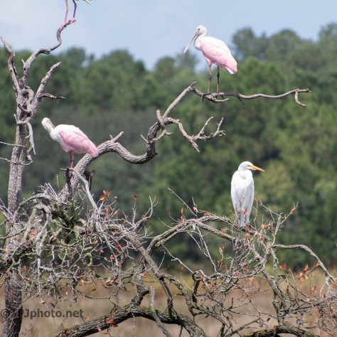 The Spoonbill Tree - click to enlarge