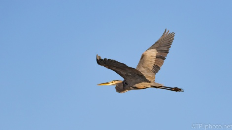 Blue Sky Fly By, Heron