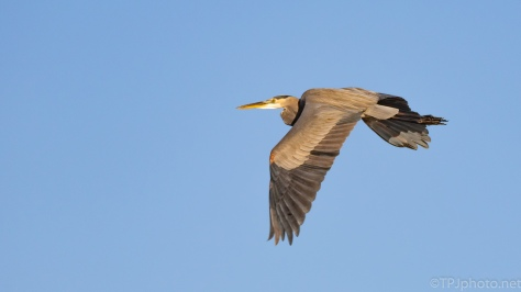 Blue Sky Fly By, Heron