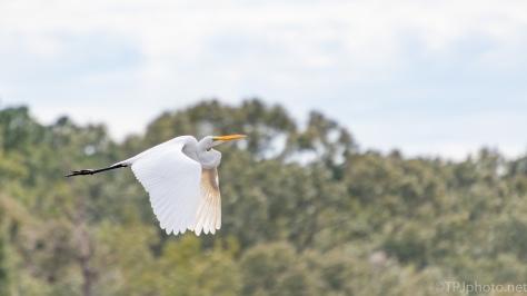 Quick Egret - click to enlarge