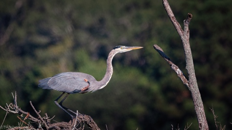 The Sign To Press The Shutter, Heron - click to enlarge