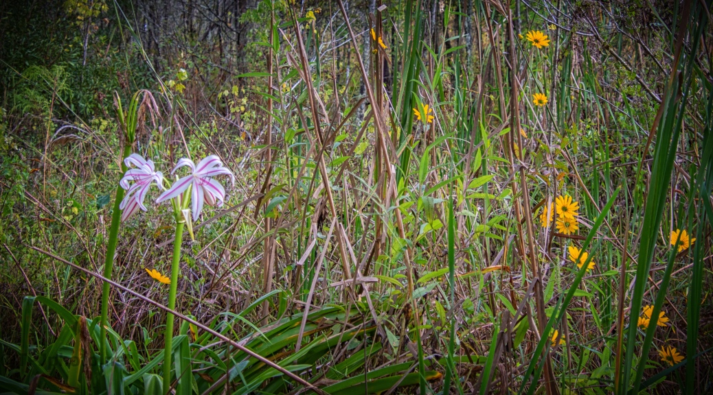 Last Of The Wildflowers - click to enlarge