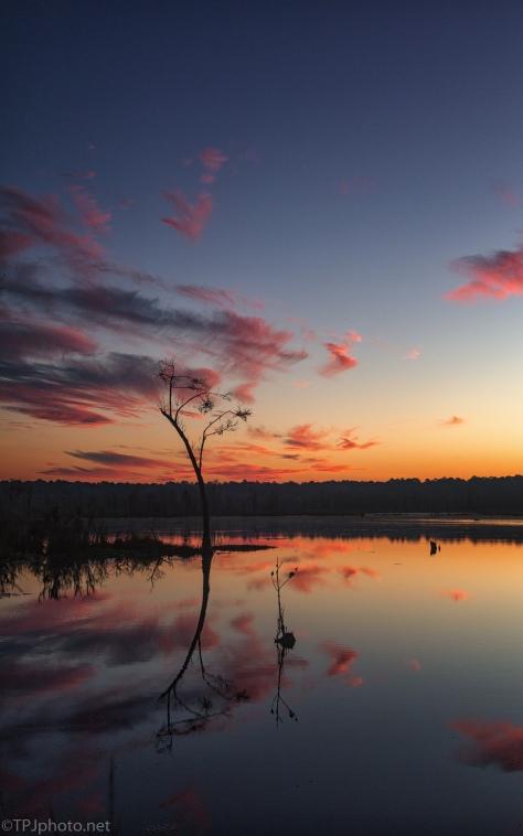 ACE Basin, Marsh Sunrise (2) - click to enlarge