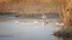 Pink Birds Add Something Special To A Landscape