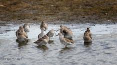 Resting, The Small Marsh Birds