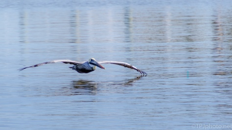 Riding A Cushion Of Air, Pelican - click to enlarge