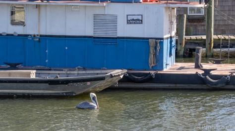 Shrimp Boat Pier - click to enlarge