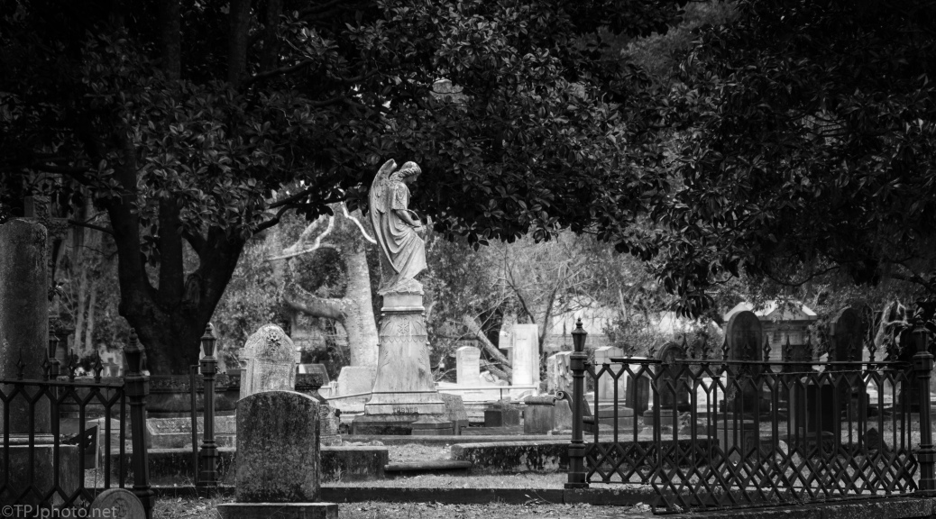 Angel In Magnolia Cemetery - click to enlarge