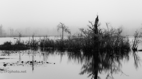 Foggy And Wet Morning - click to enlarge