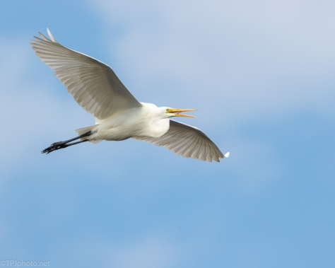 A Nice Sky, Egret - click to enlarge