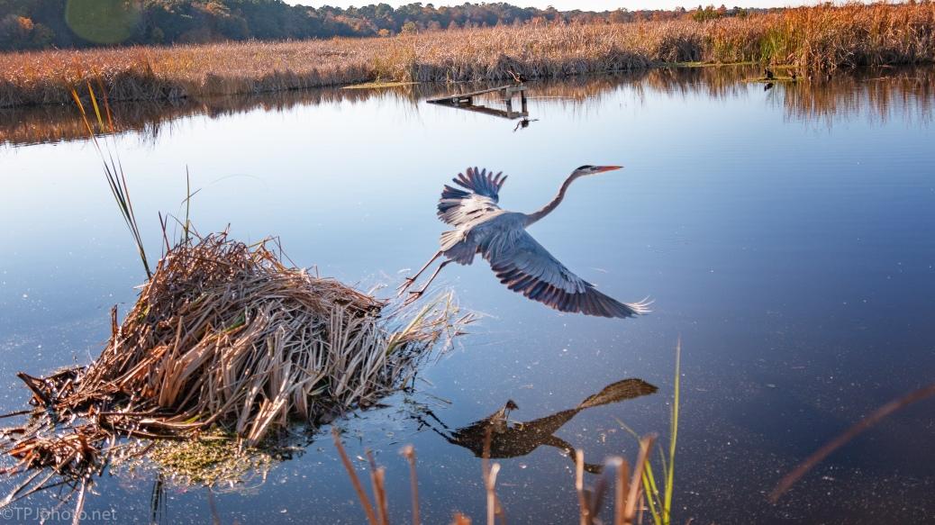 Enough Photographs, I'm Gone, Heron - click to enlarge