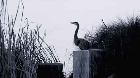 Dusk By The River, Heron - click to enlarge