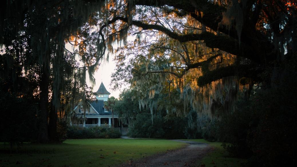 Sundown Behind A Plantation - click to enlarge