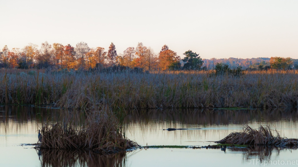 Fall Evening - click to enlarge