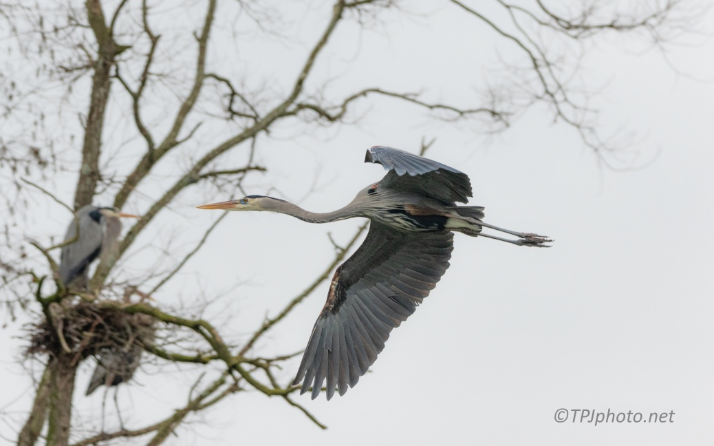 Flying Through The Branches - click to enlarge