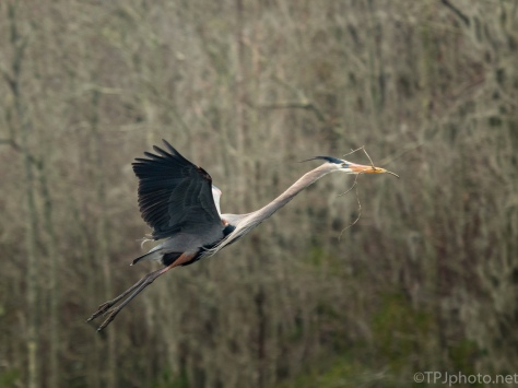 The Flying Dragon, Heron - click to enlarge
