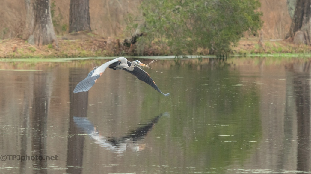 A Low Approach, Heron - click to enlarge