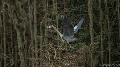 Up And Away (2), Heron - click to enlarge