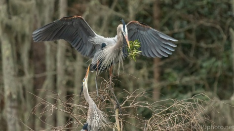 Bearing Gifts For The Lady, Heron - click to enlarge