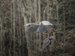 Up And Away (1), Heron - click to enlarge