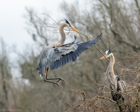Now That's An Impressive Stick, Heron - click to enlarge