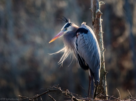 Windy Afternoon, Heron - click to enlarge