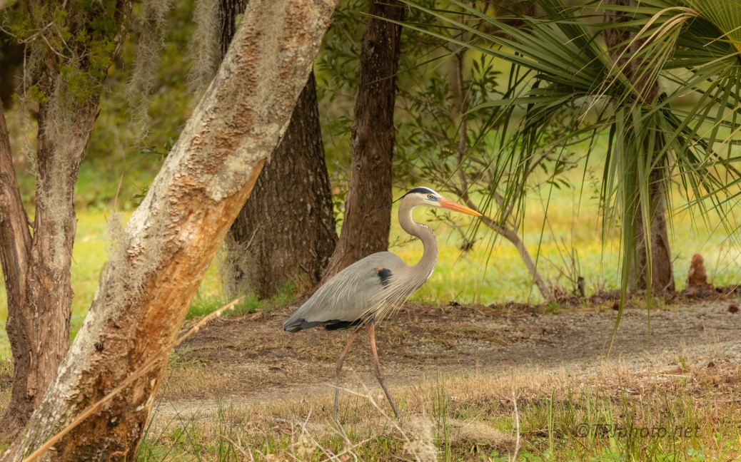 Sharing The Trail, Heron - click to enlarge
