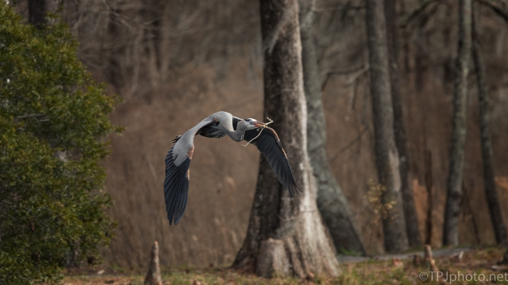 Over A Swamp, Heron - click to enlarge