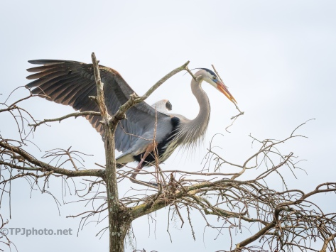 Not Waiting For Him To get Home, Heron - click to enlarge