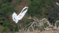 The Grace Of A Great Egret - click to enlarge