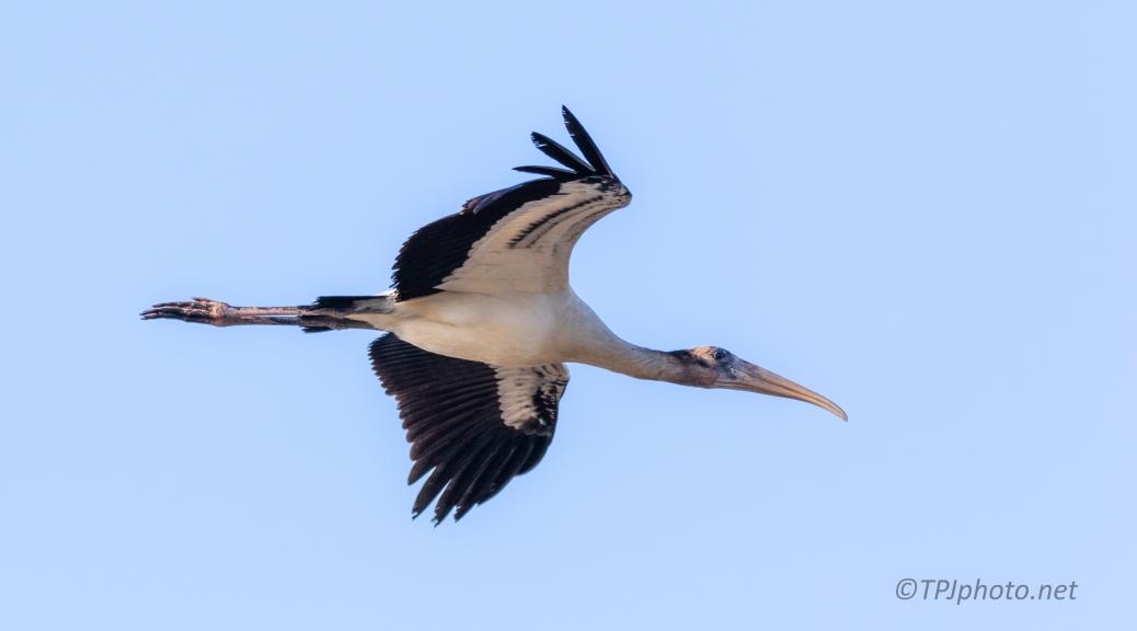 Big Bird, Pun Intended - click to enlarge