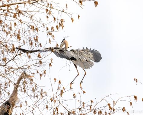 Photographing A Dragon, Heron