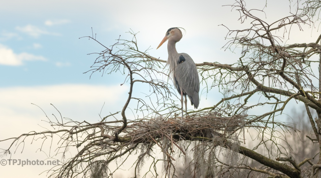 Days End, Heron - click to enlarge