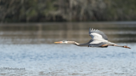 A Glide By, Heron - click to enlarge