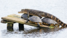 Walking On Turtles, A Tutorial - click to enlarge