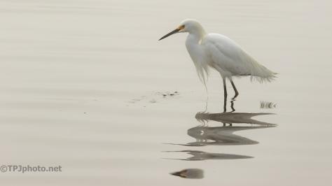 Snowy Egret Portrait - click to enlarge