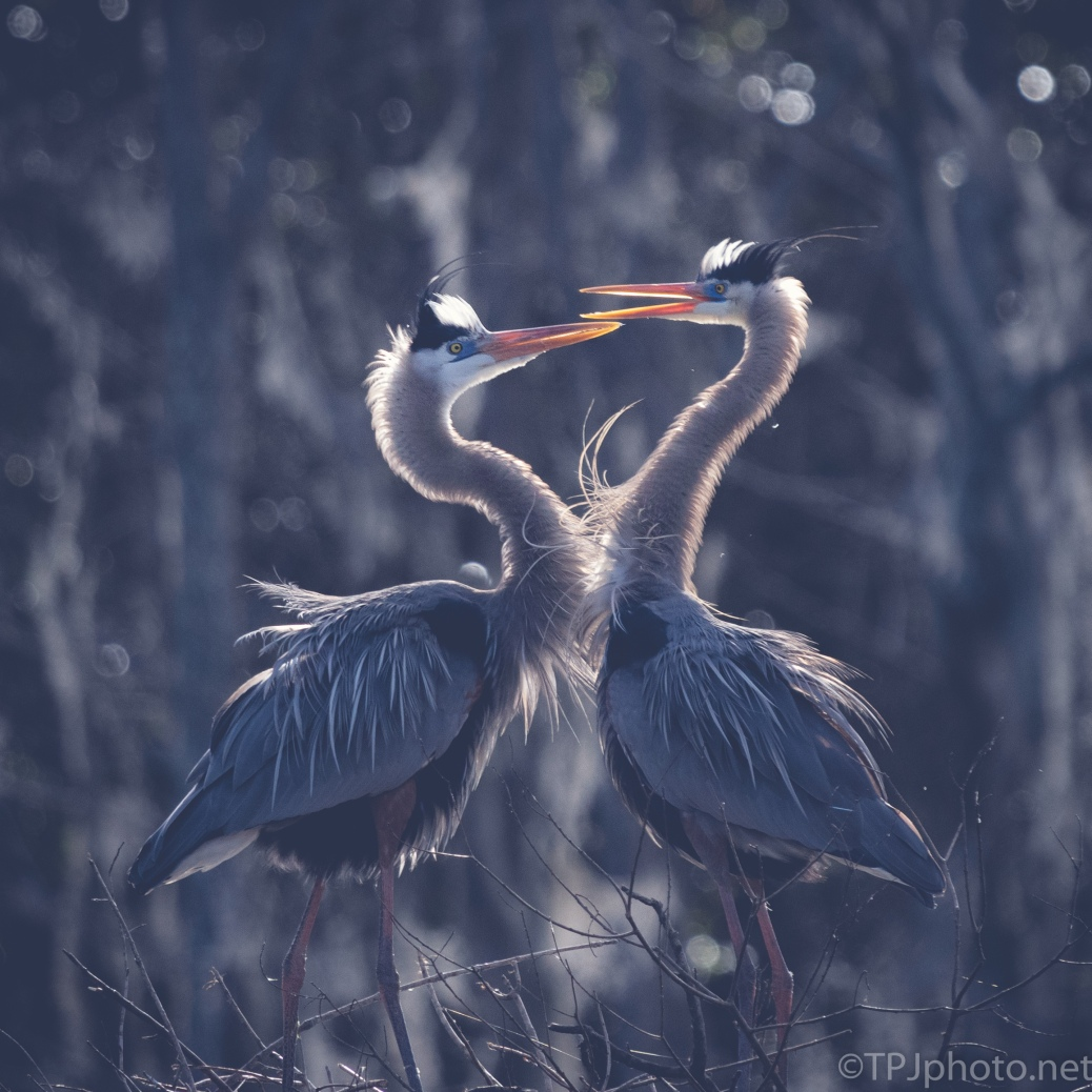 Two Versions, Herons - click to enlarge