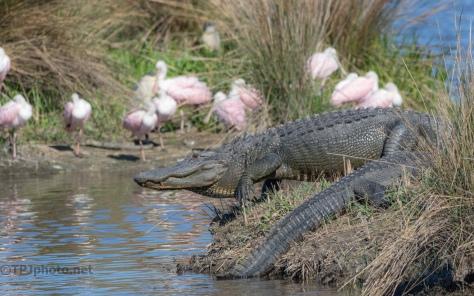 Neighbors In A Marsh